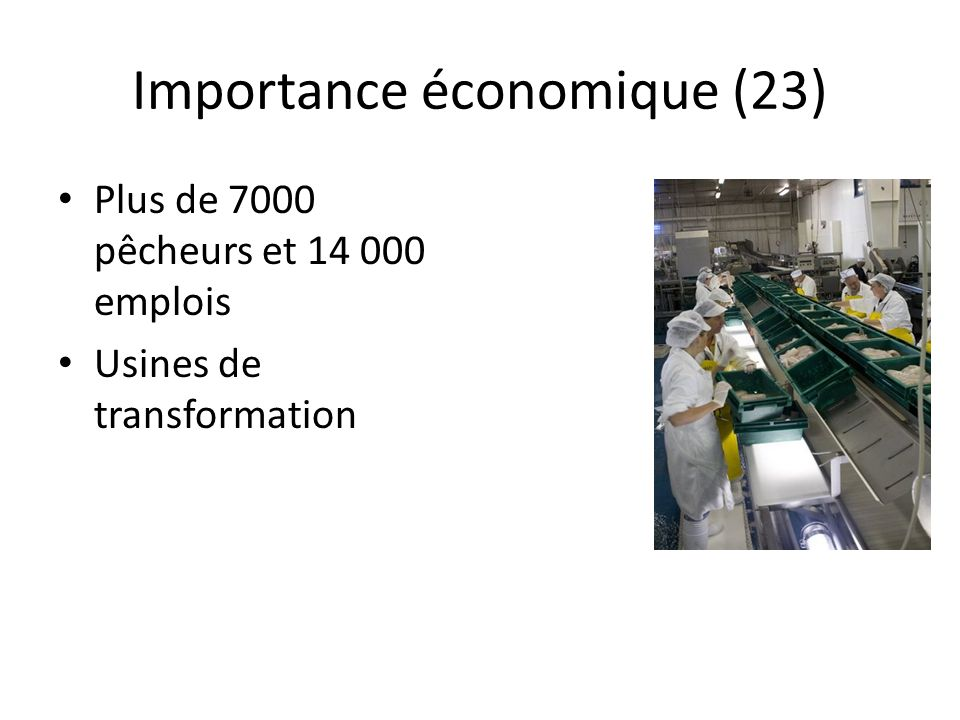 Importance économique (23) Plus de 7000 pêcheurs et 14 000 emplois Usines de transformation