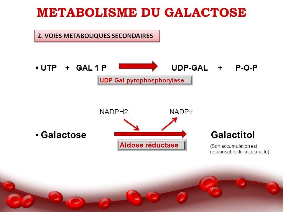METABOLISME DU GALACTOSE 2. VOIES METABOLIQUES SECONDAIRES UTP + GAL 1 P UDP-GAL + P-O-P Galactose Galactitol UDP Gal pyrophosphorylase Aldose réducta