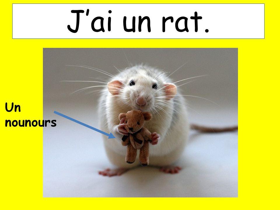 Jai un rat. Un nounours