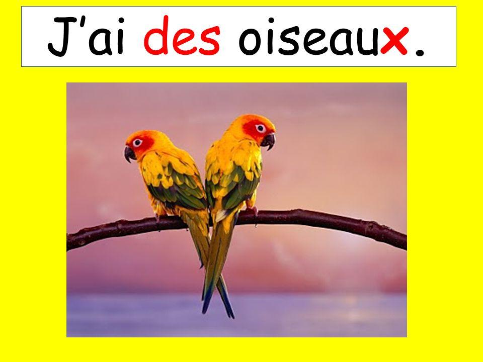 Jai des oiseaux.