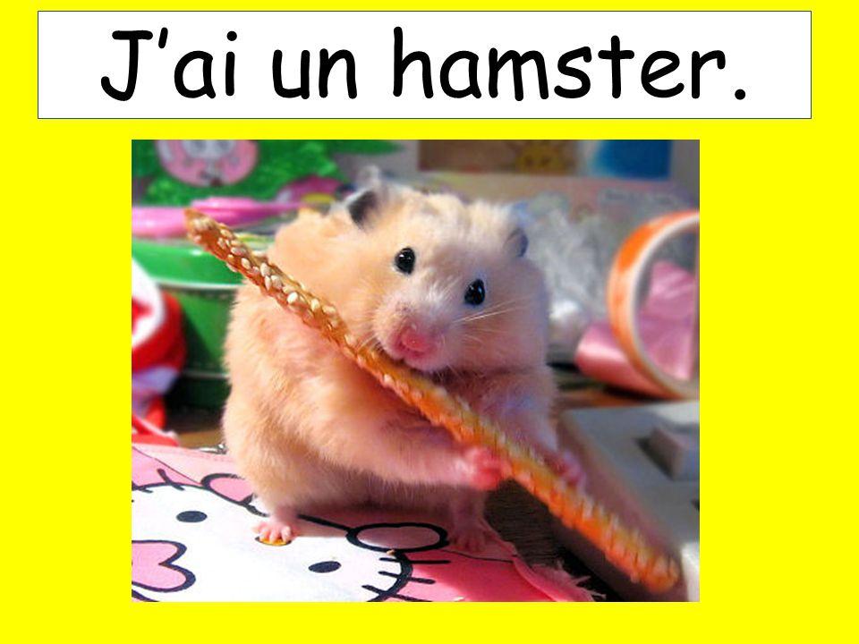 Jai un hamster.
