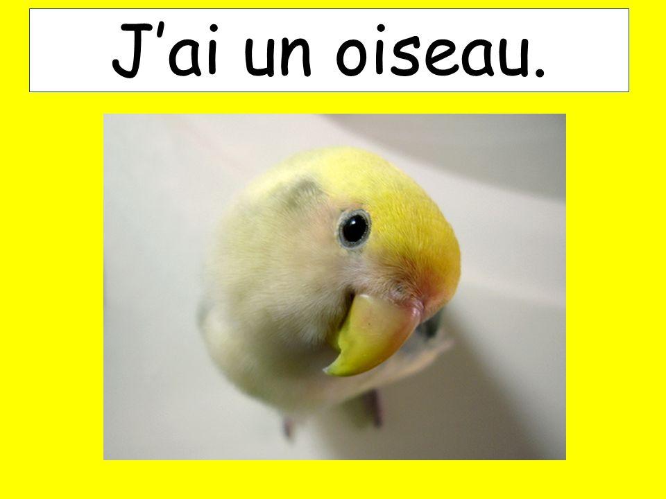 Jai un oiseau.