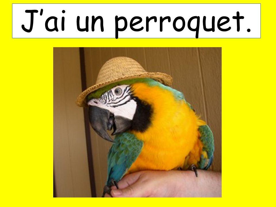 Jai un perroquet.