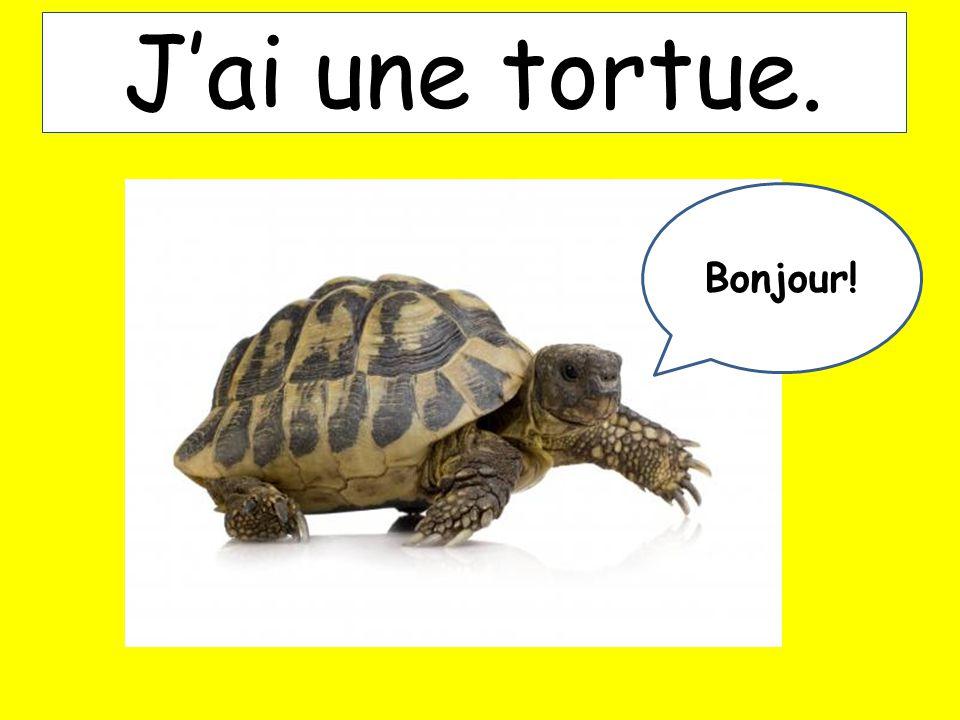Jai une tortue. Bonjour!