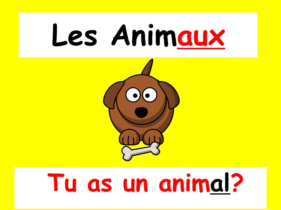 Les Animaux Tu as un animal