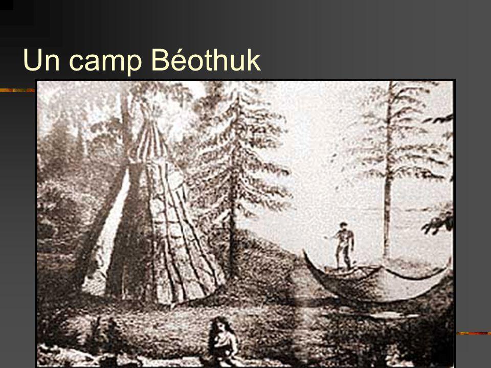 Un camp Béothuk