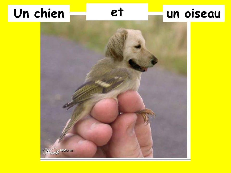 Un chien et un oiseau