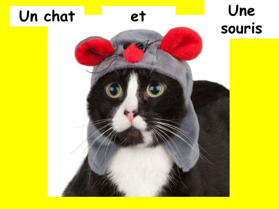 Un chatet Une souris