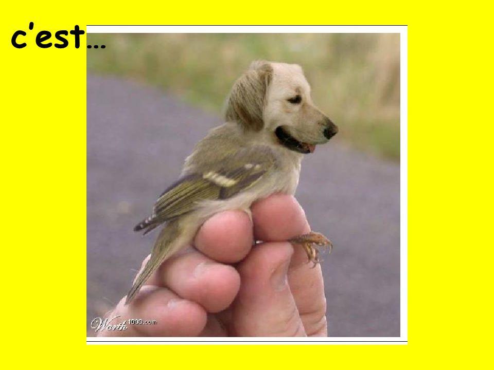 Un chevaletun oiseau