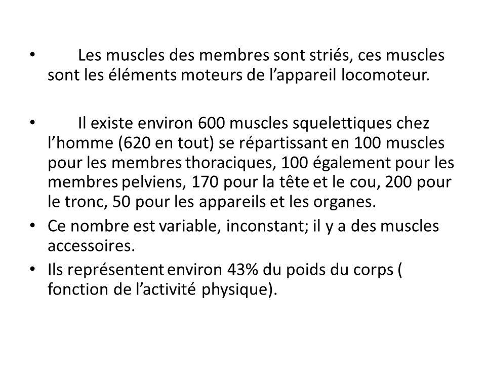 Les muscles cumulent généralement plusieurs fonctions (exemple : flexion et pronation du coude par le muscle rond pronateur) sans pouvoir avoir deux fonctions opposées.