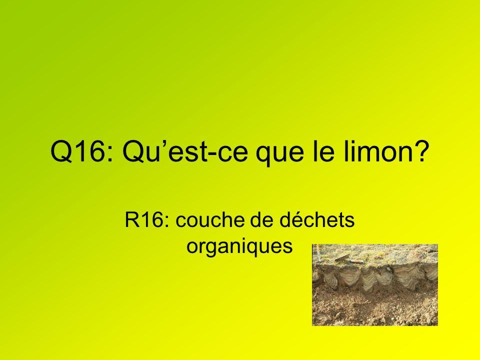 Q16: Quest-ce que le limon? R16: couche de déchets organiques