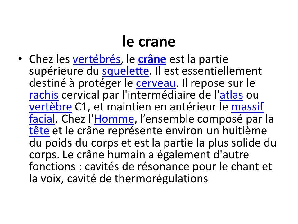 le crane Chez les vertébrés, le crâne est la partie supérieure du squelette. Il est essentiellement destiné à protéger le cerveau. Il repose sur le ra