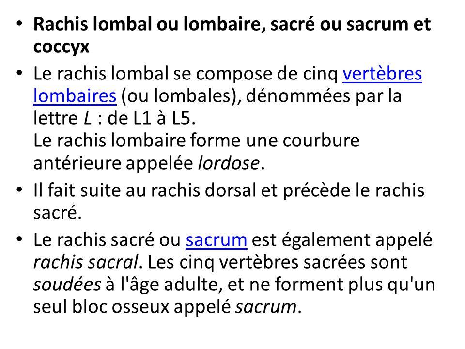 Rachis lombal ou lombaire, sacré ou sacrum et coccyx Le rachis lombal se compose de cinq vertèbres lombaires (ou lombales), dénommées par la lettre L : de L1 à L5.
