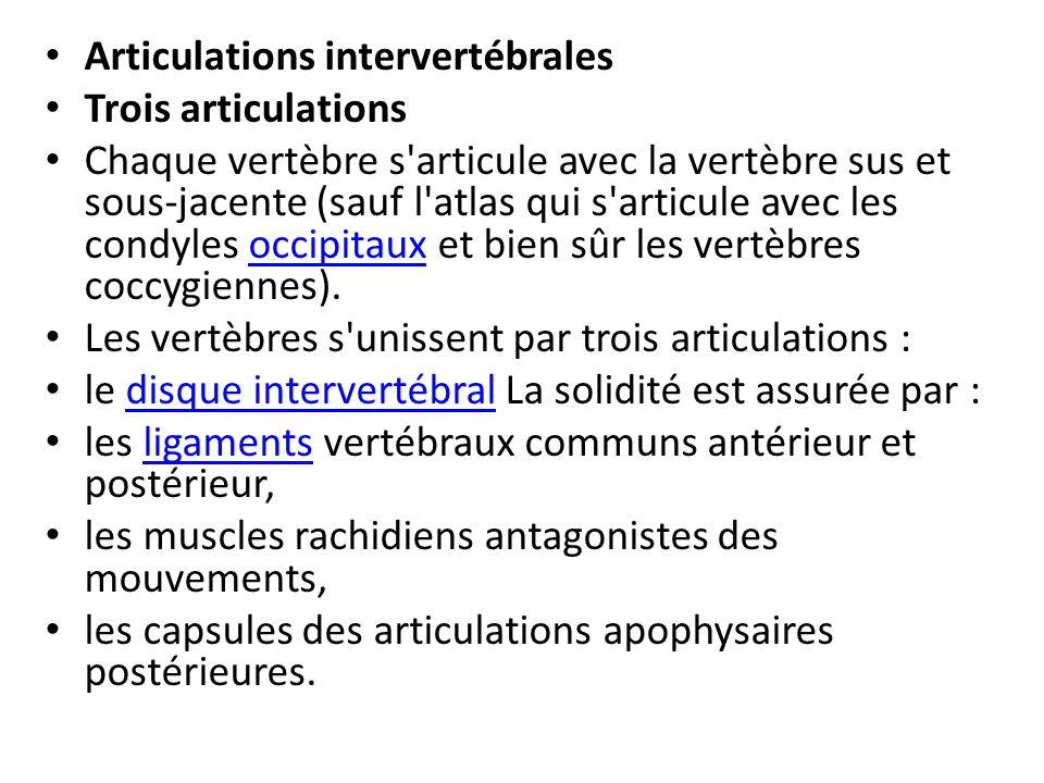 Articulations intervertébrales Trois articulations Chaque vertèbre s'articule avec la vertèbre sus et sous-jacente (sauf l'atlas qui s'articule avec l