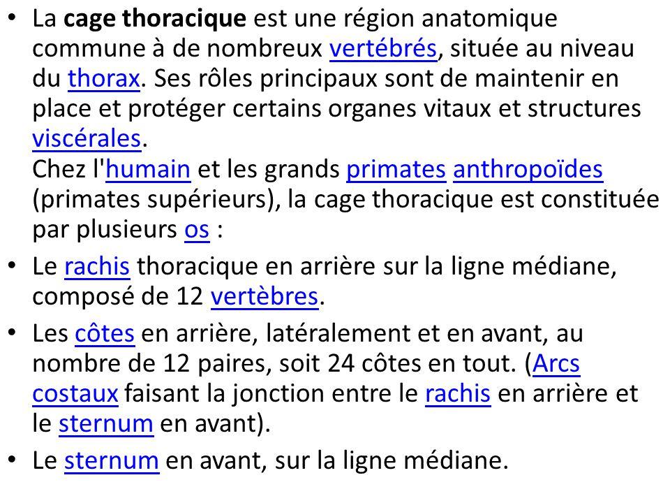 La cage thoracique est une région anatomique commune à de nombreux vertébrés, située au niveau du thorax.