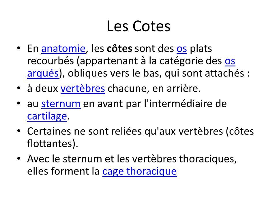 Les Cotes En anatomie, les côtes sont des os plats recourbés (appartenant à la catégorie des os arqués), obliques vers le bas, qui sont attachés :anat