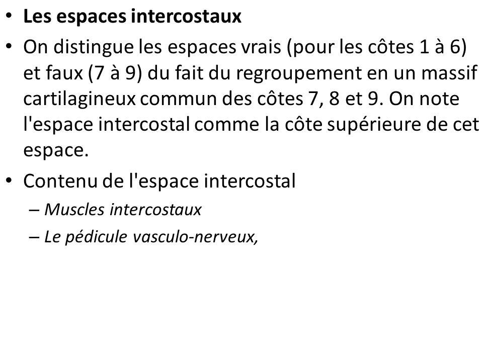 Les espaces intercostaux On distingue les espaces vrais (pour les côtes 1 à 6) et faux (7 à 9) du fait du regroupement en un massif cartilagineux commun des côtes 7, 8 et 9.