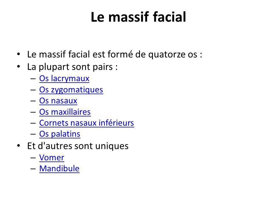 Le massif facial Le massif facial est formé de quatorze os : La plupart sont pairs : – Os lacrymaux Os lacrymaux – Os zygomatiques Os zygomatiques – Os nasaux Os nasaux – Os maxillaires Os maxillaires – Cornets nasaux inférieurs Cornets nasaux inférieurs – Os palatins Os palatins Et d autres sont uniques – Vomer Vomer – Mandibule Mandibule