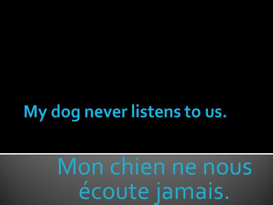 Mon chien ne nous écoute jamais.
