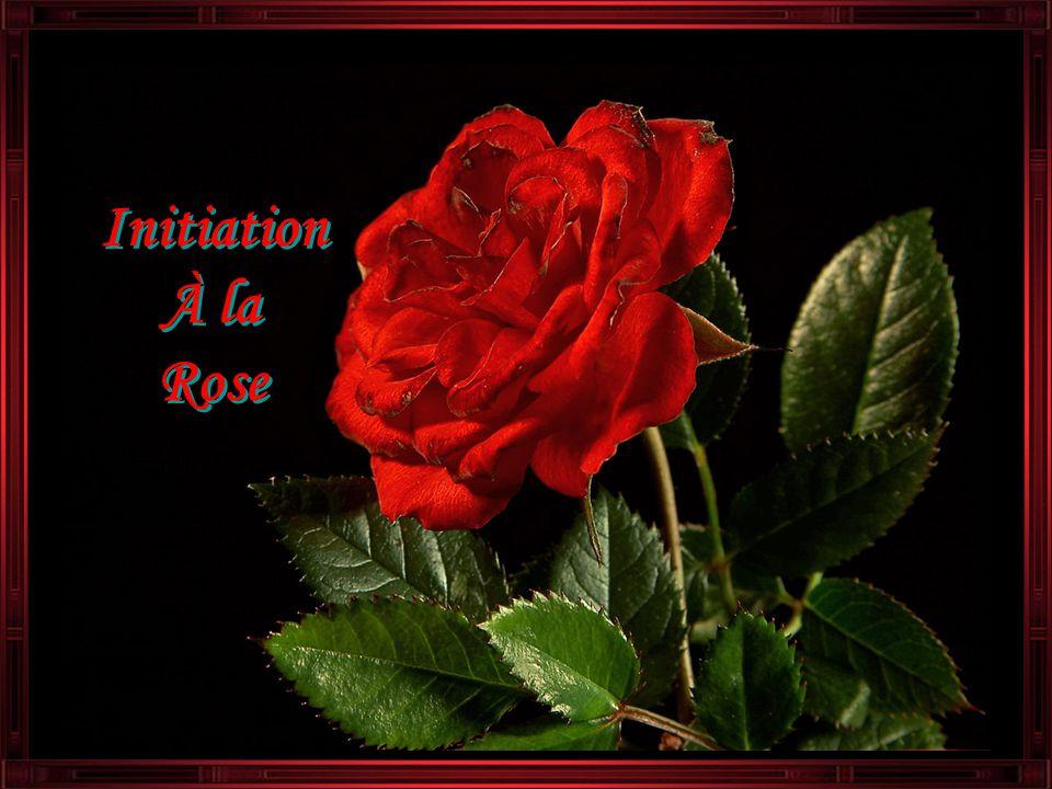 Initiation À la Rose Initiation À la Rose