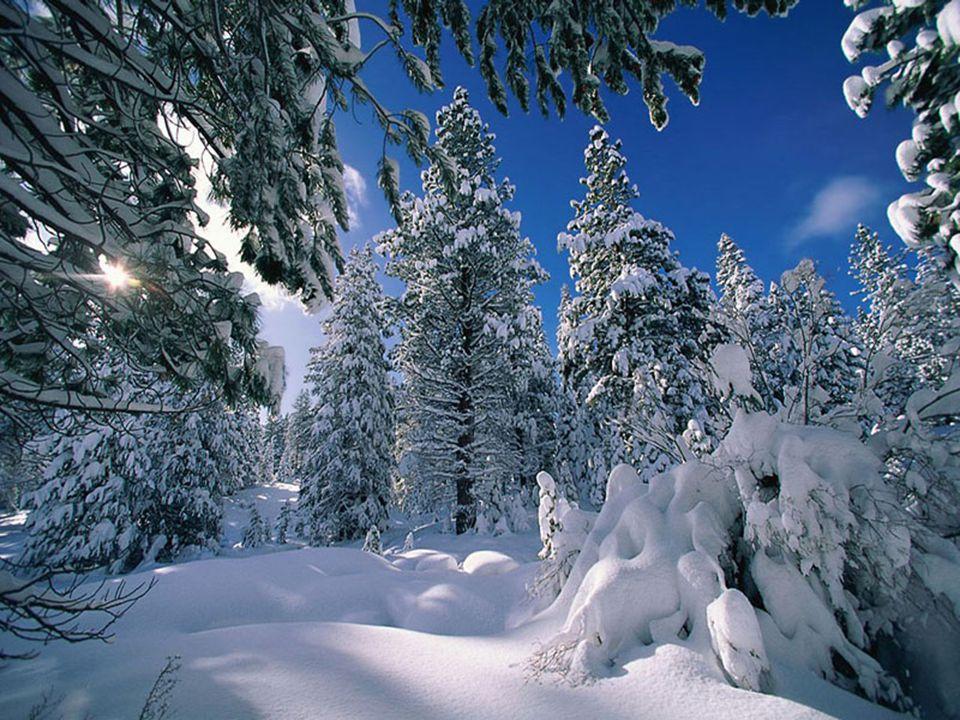 À bien y penser…tu as ton utilité… Tu protèges nos terres fertiles… Tu hydrates nos arbres…tu as un bon mobile… Tous ces beaux flocons qui brillent… S