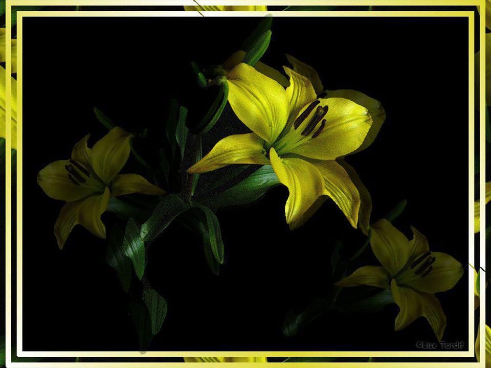 Complimenter est un jardin fleuri où poussent les plus belles fleurs celles qui fleurissent dans notre cœur. Complimenter ce n'est pas ajouter de la m