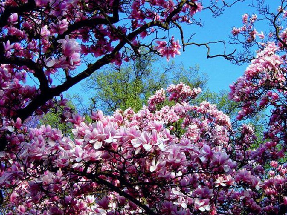 Désormais…admirez votre ciel dignement… Vous avez divinement atteint votre fiabilité… Vivez ce répit en toute tranquillité…