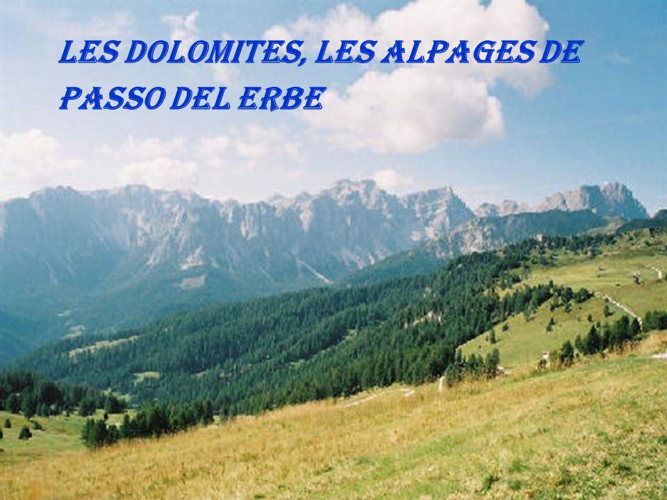 Les Dolomites, les alpages de Passo del Erbe