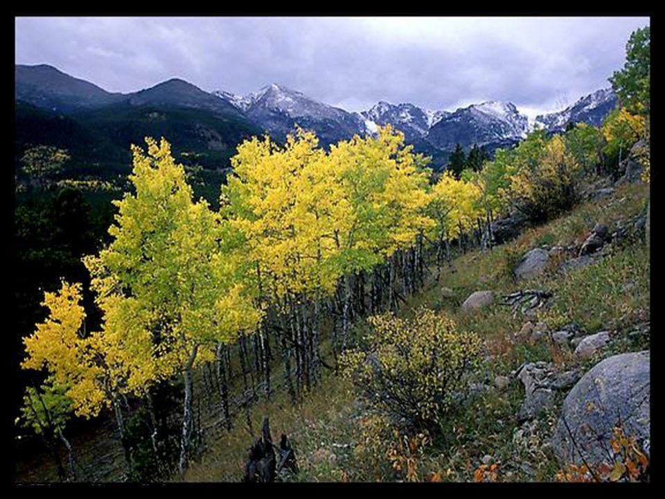 Aide-nous à lire les messages que tu as cachés dans les feuilles et les rochers. Rends-nous sages afin que nous saisissions ce que tu nous as enseigné