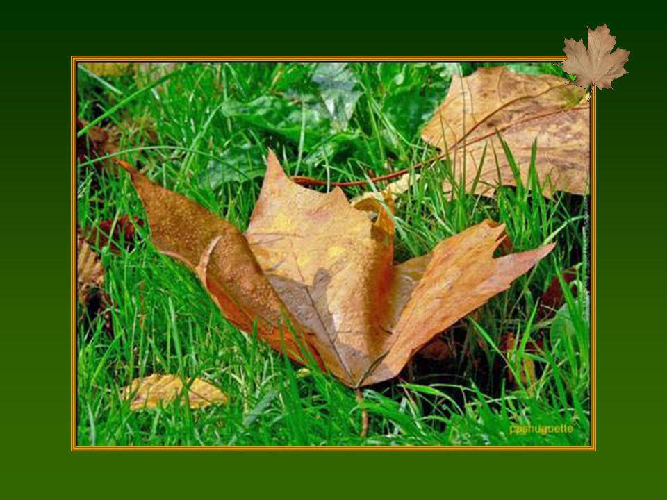 Lautomne raconte à la terre les feuilles qu'elle a prêtées à l'été. Georg Christoph Lichtenberg