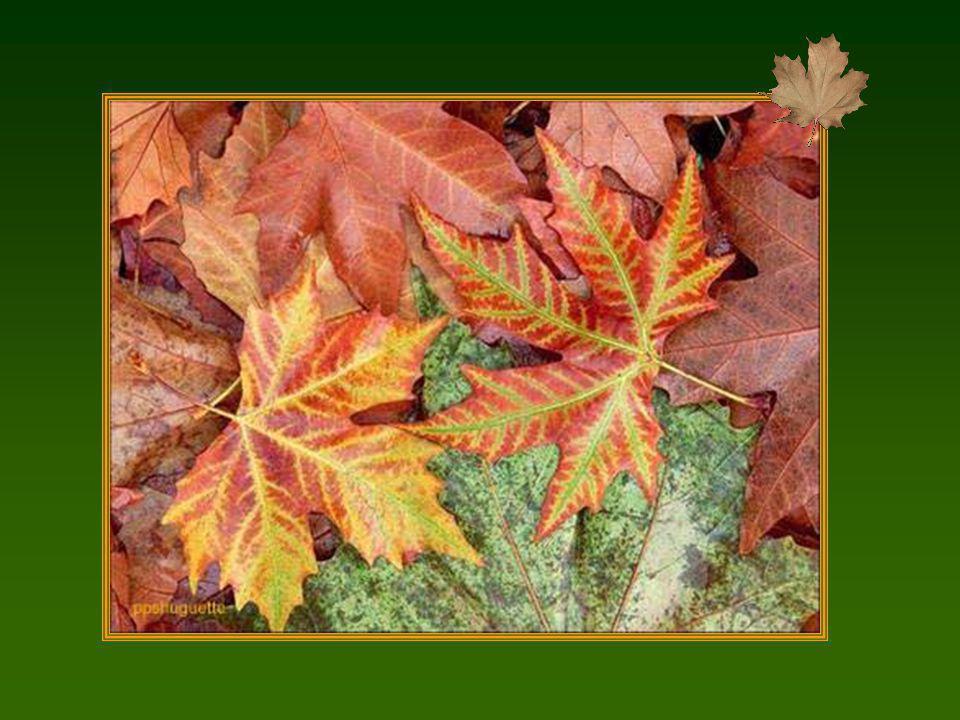 A lautomne des saisons, ce sont les feuilles qui meurent.