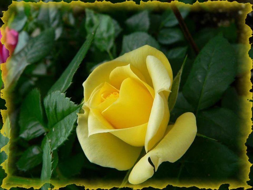 Alors pour vivre paisiblement… Il faut pardonner simplement… Choisir de vivre librement… Respirer sans fardeau… Faites-vous ce cadeau…