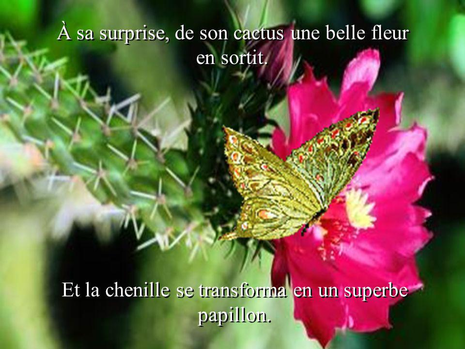 À sa surprise, de son cactus une belle fleur en sortit.