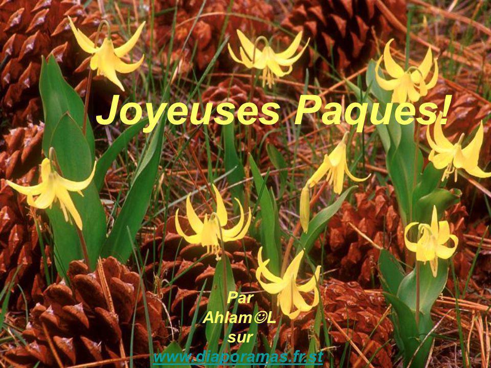 Joyeuses Paques! Par Ahlam L sur www.diaporamas.fr.st