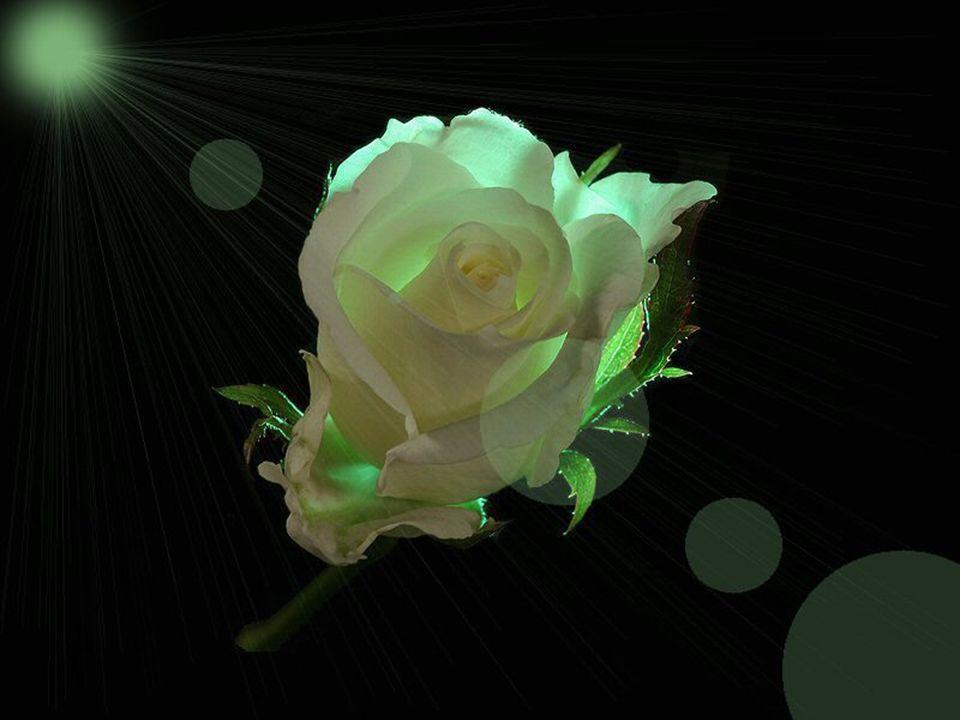 Maintenant votre âme connaît une sérénité… Que seule la vie peut vous apporter… Grandir vers votre ultime destinée… Pourquoi faut-il pleurer pour y cr