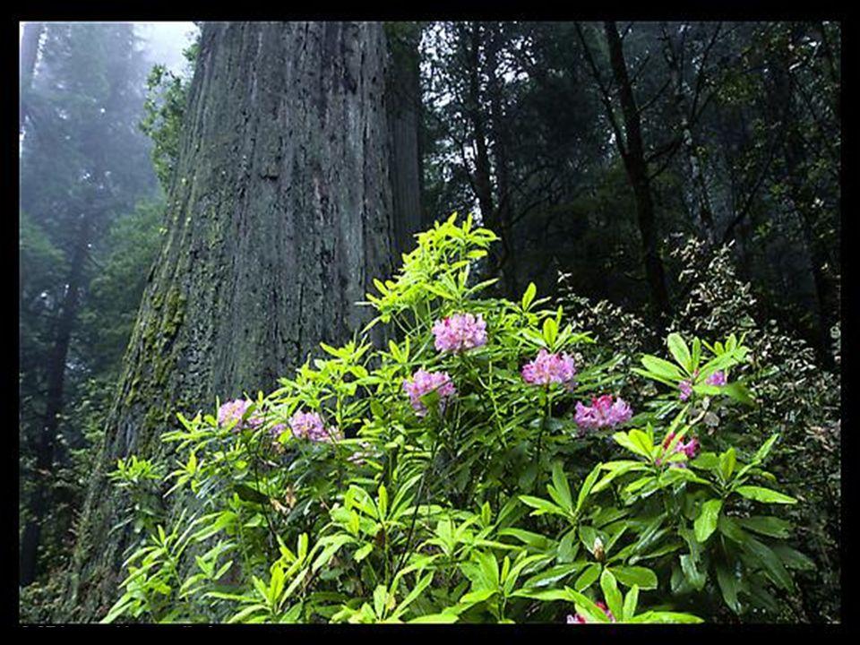 On voit des fleurs dans le pays ; la saison de la chanson arrive ; et on entend dans notre pays la voix de la tourterelle.