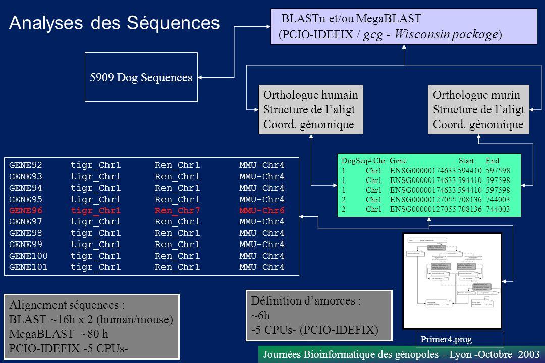 Journées Bioinformatique des génopoles – Lyon -Octobre 2003 5909 Dog Sequences BLASTn et/ou MegaBLAST (PCIO-IDEFIX / gcg - Wisconsin package ) Ortholo