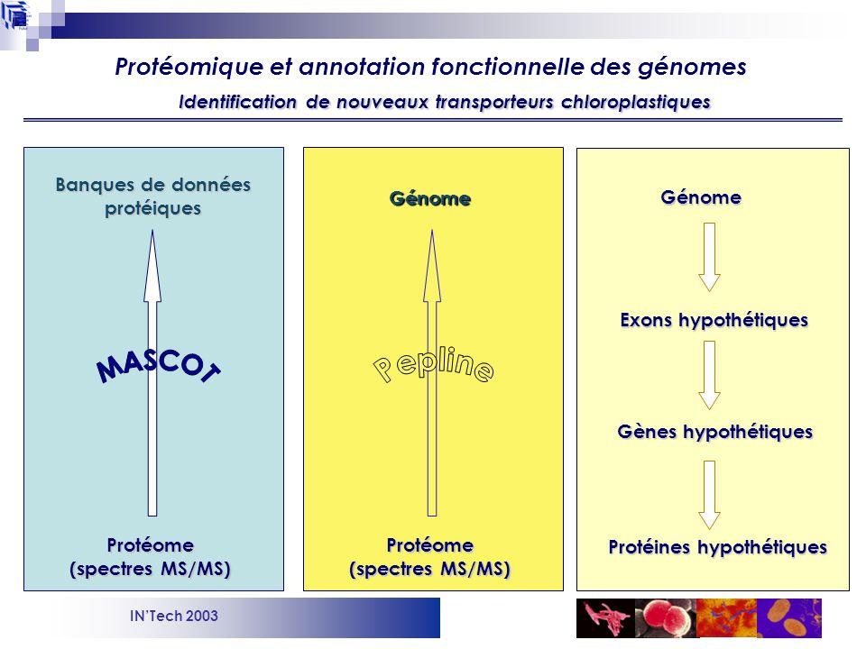 INTech 2003 Protéome (spectres MS/MS) Banques de données protéiques Génome Protéines hypothétiques Gènes hypothétiques Exons hypothétiques Génome Protéome (spectres MS/MS) Identification de nouveaux transporteurs chloroplastiques Protéomique et annotation fonctionnelle des génomes