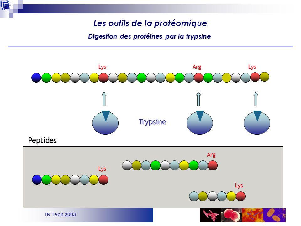 INTech 2003 Cellule de collisionFragmentation Analyseur ToF Détecteur Source nano-electrospray Quadrupole Sélection des ions Spectrométrie de masse en mode tandem : sélection et fragmentation des peptides Les outils de la protéomique NanoESI-MS/MS