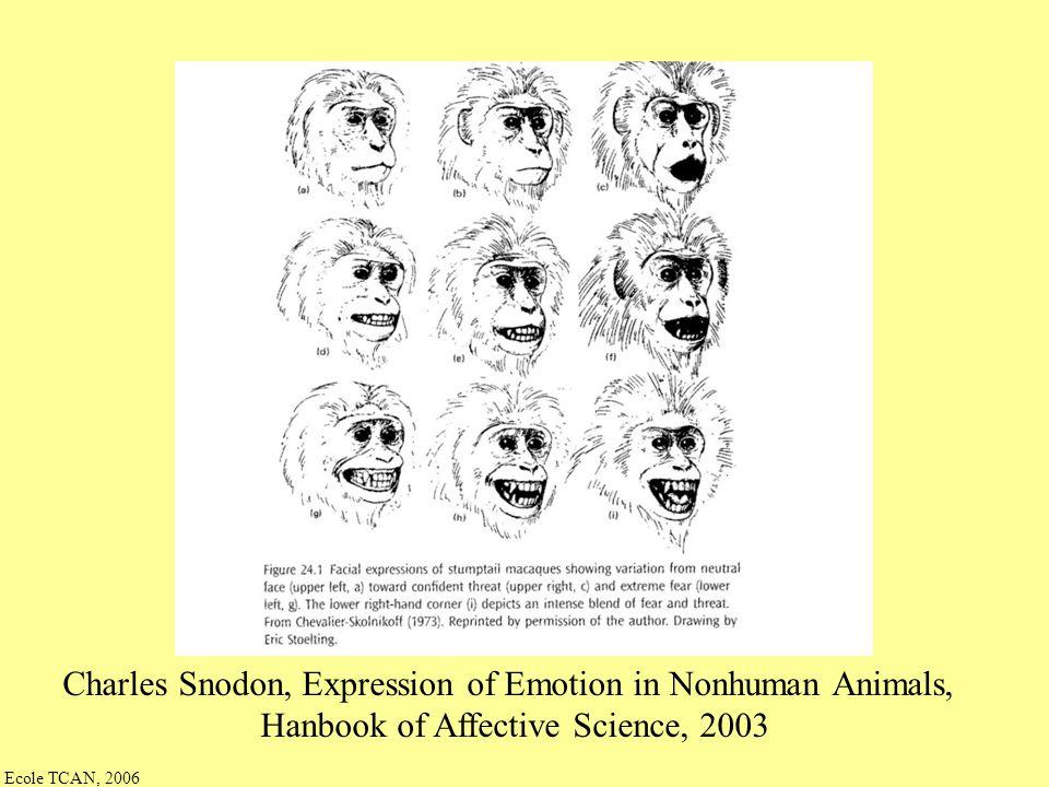 Ecole TCAN, 2006 Condition de contrôle : « resynthèse complète » joie satisfaction anxiété inquiétude tristesse – décép.