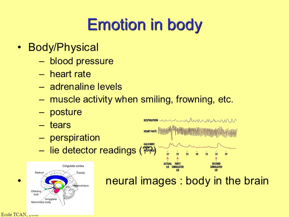 Ecole TCAN, 2006 decision taking [Frijda, Damasio] prosody Intonation Rhyth m face body gestuality somatic system The processing of moods/emotions indices in C-Clone commands on expressions Emotional States changing voice internal emotion events external emotion events