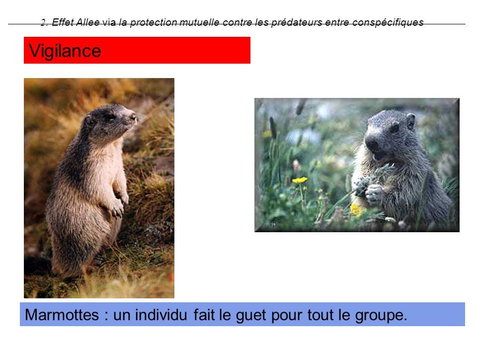 Marmottes : un individu fait le guet pour tout le groupe. 2. Effet Allee via la protection mutuelle contre les prédateurs entre conspécifiques Vigilan