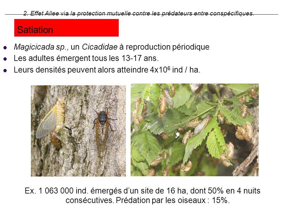 Satiation Magicicada sp., un Cicadidae à reproduction périodique Les adultes émergent tous les 13-17 ans. Leurs densités peuvent alors atteindre 4x10