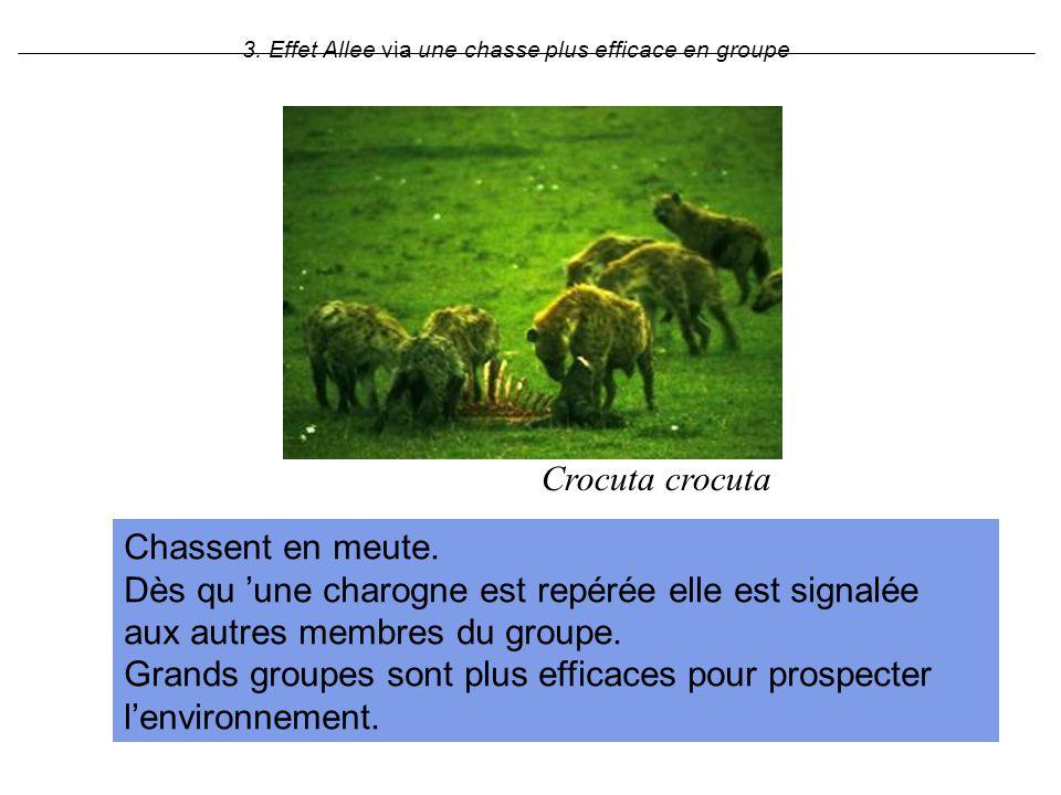 3. Effet Allee via une chasse plus efficace en groupe Crocuta crocuta Chassent en meute. Dès qu une charogne est repérée elle est signalée aux autres