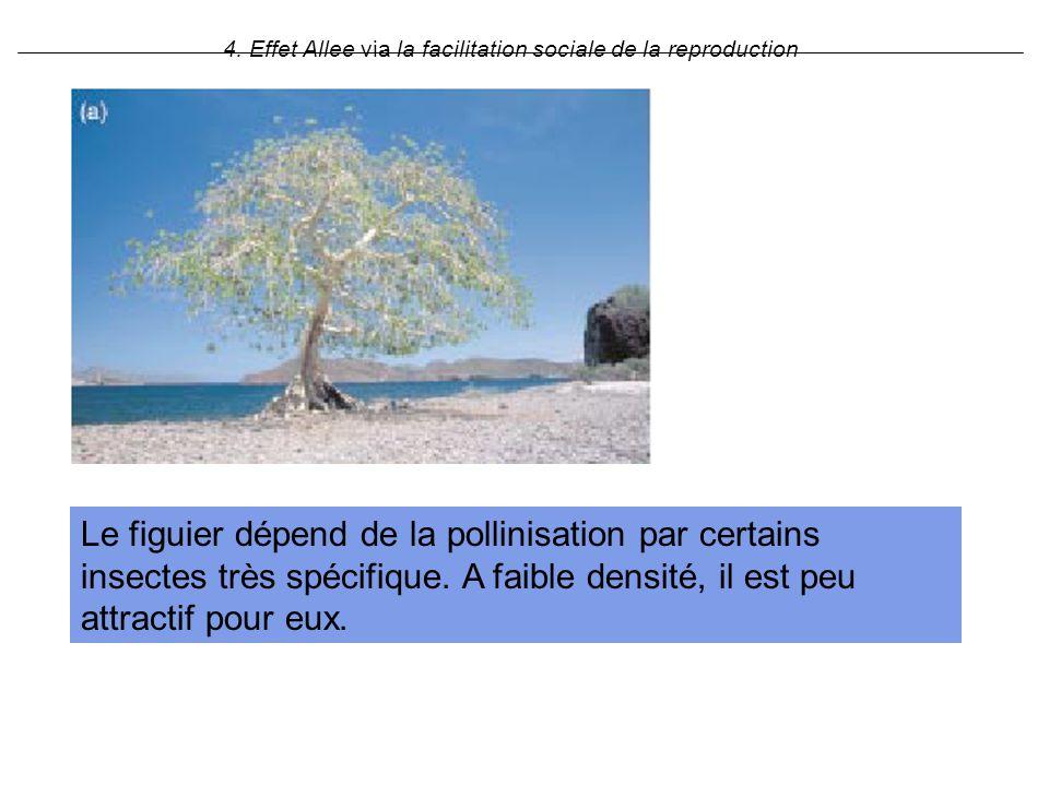 4. Effet Allee via la facilitation sociale de la reproduction Le figuier dépend de la pollinisation par certains insectes très spécifique. A faible de