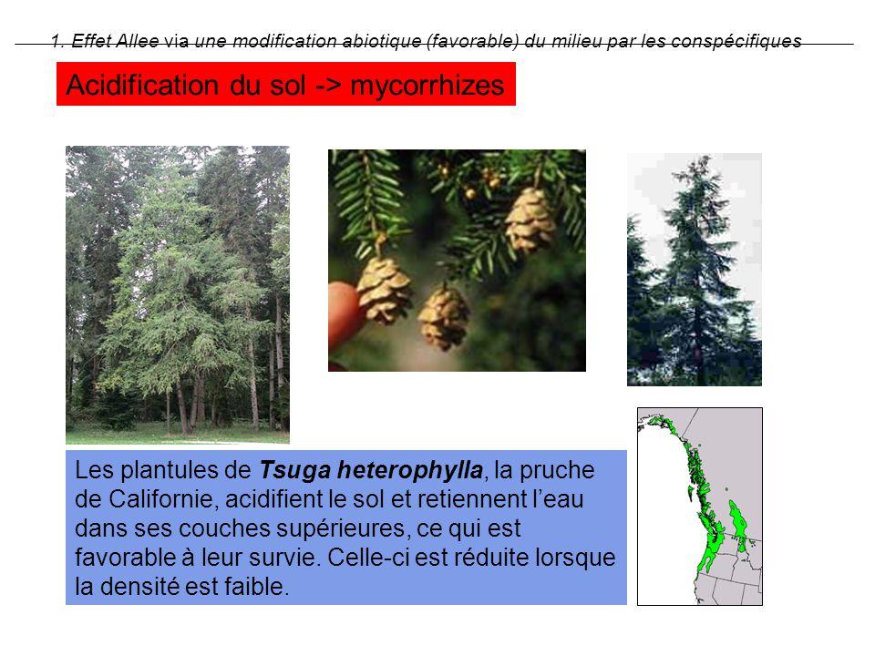 1. Effet Allee via une modification abiotique (favorable) du milieu par les conspécifiques Les plantules de Tsuga heterophylla, la pruche de Californi