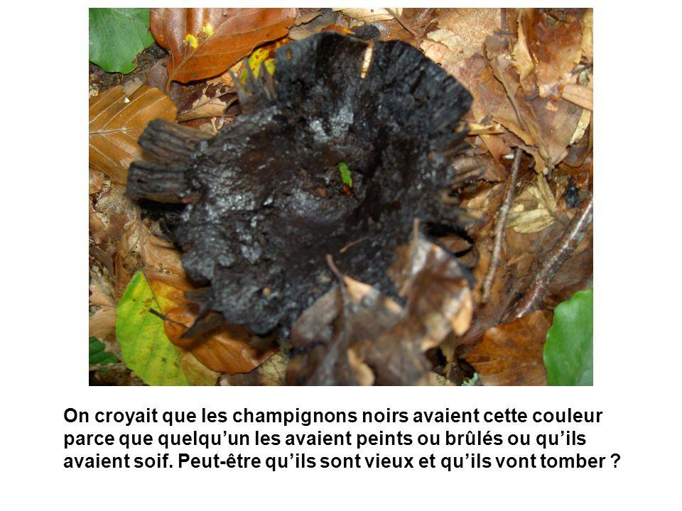 On croyait que les champignons noirs avaient cette couleur parce que quelquun les avaient peints ou brûlés ou quils avaient soif. Peut-être quils sont