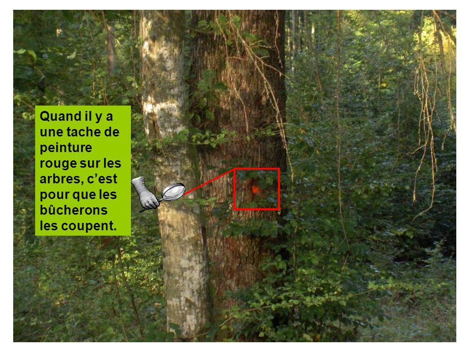 Quand il y a une tache de peinture rouge sur les arbres, cest pour que les bûcherons les coupent.