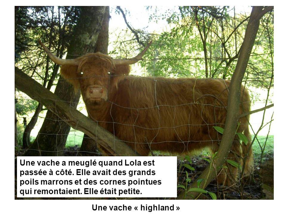 Une vache « highland » Une vache a meuglé quand Lola est passée à côté. Elle avait des grands poils marrons et des cornes pointues qui remontaient. El