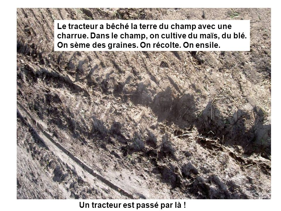 Un tracteur est passé par là ! Le tracteur a bêché la terre du champ avec une charrue. Dans le champ, on cultive du maïs, du blé. On sème des graines.